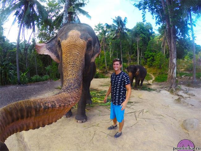 Слон селфи