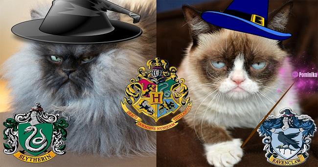 pominika_cat_potter